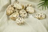 Овощ гриба белого цветка вкусный высушенный