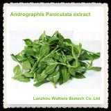 Polvo del extracto de Andrographis Paniculata de la alta calidad