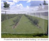 農業の反昆虫のネットを得ているアブラムシ