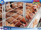 Гальванизированная стальная полинянная цыплятина/дом цыпленка для оптовой продажи (SSW-H-007)
