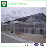 고품질 폴리탄산염 장 Venlo 유형 온실