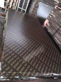 Handelsfurnierholz und Shuttering Furnierholz für Contruction