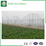 상업적인 다중 경간 정원 플라스틱 온실