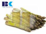 A colheita nova 370ml enlatou espargos enlatados vegetais enlatados espargos