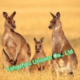 Peluche avec le jouet de peluche de kangourou de bavoir de bébé d'écharpe d'indicateur