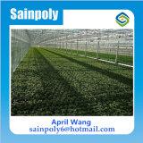 A estufa a mais barata do policarbonato para agricultural