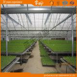 네덜란드 기술 고품질 Single-Layer 필름 온실