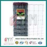 Rete fissa rivestita del giacimento del PVC/rete fissa dell'azienda agricola/rete fissa del campo (fabbrica della Cina)