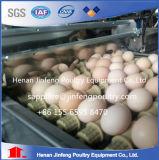 Клетка яичка цыпленка ячеистой сети Q235 кладя