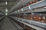 Клетки цыпленка птицы цыплятины горячего высокого качества автоматические для цыпленка яичка слоя