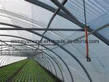 20/10 anti réseau d'insecte de maille pour l'agriculture, anti qualité de réseau d'insecte de premier HDPE