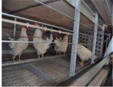 As aves domésticas automáticas da galinha prendem o equipamento de exploração agrícola para a tecnologia de Poul do reprodutor (tipo quadro de H)