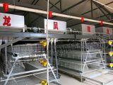 Capacidad grande, alta jaula del pollo de la capa de Qualityof con ISO9001