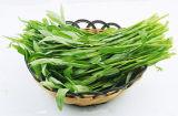 茎野菜水Convolvulusのための泡クリーニング機械