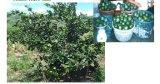 Engrais de saleté d'Unigrow sur toute plantation de fruit