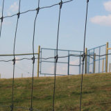 Field Fence의 분야 Fence 또는 Animal Fence /Cattle Fence/Manufacturer