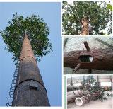 Torre camuflada comunicación decorativa galvanizada del árbol de pino