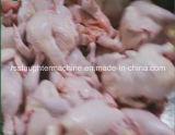 Halalの屠殺場のためのステンレス鋼の家禽の屠殺装置