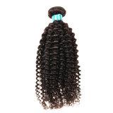 Cheveu bouclé crépu malaisien chaud de la Vierge 8A 4 paquets de Rosa de produits capillaires de cheveux humains de Vierge de cheveu d'armure bouclée crépue malaisienne d'Afro