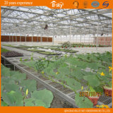Multi-Span Glass Greenhouse für Planting Vegetables und Fruits