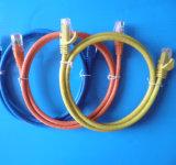Chat. cordon de connexion de PVC de 5e UTP