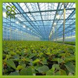 Estufa agricultural com irrigação de gotejamento