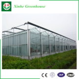 Estufa de vidro de Multispan para plantar