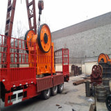 PET Steinkiefer Crusher600*900
