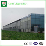 農業のVeloの野菜のためのガラスマルチスパンの温室