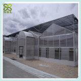 Casa verde agricultural do PVC para o tomate