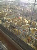 De Hete Galvanisatie van het Gebruik van het Landbouwbedrijf van het gevogelte een Kooi van de Kip van de Jonge kip van het Type Kleine