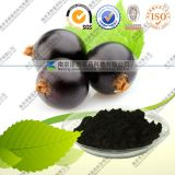 100%Natural Black Currants Extract 5-25% Anthocyanidins