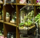 Terrarium di vetro geometrico succulente irregolare Wardian