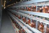 Гальванизированная клетка слоя батареи фермы цыпленка Breeding с автоматический подавать