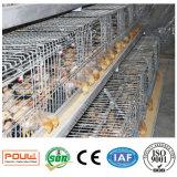Het volledige Automatische Nieuwe Systeem van de Apparatuur van de Kooien van de Kip van de Jonge kip (een Frame van het Type)