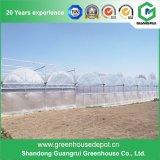 Invernadero comercial del Multi-Palmo de la agricultura plástica barata del túnel para la venta