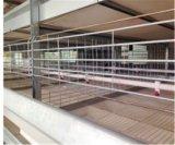Cage automatique grande de grilleur de qualité et de modèle de la meilleure vente pour la cage de volaille (type bâti de H)