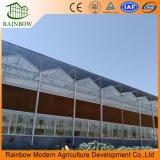 Serre chaude en verre de transmittance de toit élevé de Venlo pour l'agriculture