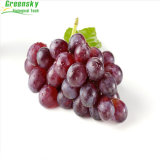 Het Zaad van de druif haalt Verscheidenheid Grape Seed P.E.