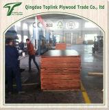 20m m madera contrachapada Shuttering común presionada caliente del dedo de dos veces/madera contrachapada de la construcción