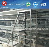 Gaiola da camada do baixo custo de China com equipamento das aves domésticas
