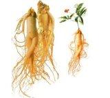 Sibirischer Ginseng-Auszug für Nahrungsmittel und Ergänzung