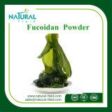 Hersteller-Zubehör-Kelp-Meerespflanze-Auszug Fucoidan 85% Puder