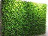 Parete decorativa della priorità bassa delle piante verdi
