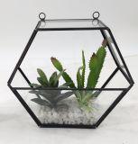 Piante conservate in vaso della decorazione dell'oro del metallo del Terrarium artificiale del blocco per grafici succulenti
