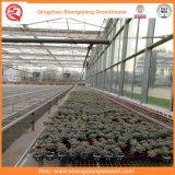 Парники цветка/плодоовощ/овощей растущий стеклянные с системой навеса