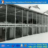 Langlebiges Gut und beständiges galvanisiertes Stahlrahmen Venlo PC Gewächshaus