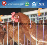 Las aves de corral de la batería de la India enjaulan con 90/96/120/160 capacidad de los pájaros