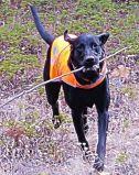 Il formato riflettente della maglia una del cane di sicurezza misura tutti