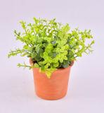 De nieuwe Reeks van het Ontwerp Kruiden (Munt/Gras/Rosemary) in de Pot van de Klei